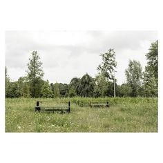 The Meadow, Beatrix Park - 01  Landscape Design: City of Amsterdam + local community