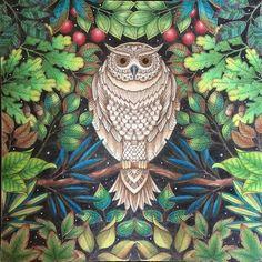 381 Best Secret Garden Coloring Book Images Coloring Books