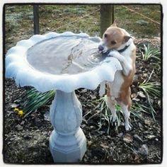 Jessie is a contestant for True Chews Dog of the Week! #TrueChews