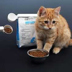 Seal and measure the food for the kitten.