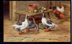 les oies.Salmon Series 5020 Drawn by E. Hunt.Geese & Hens