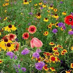 native illinois wild flowers - Flower Garden Ideas Illinois