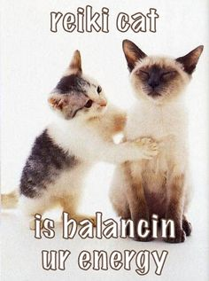 Thanks, Reiki Cat! Have a most balanced and spectacular adventure within your world today !
