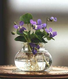 Violet Cunning: Flower Magick for Cancer Season — The Hoodwitch Ikebana, Flower Vases, Flower Art, Sweet Violets, Violets Flower, Deco Floral, Water Plants, Good Things, Glass Vase