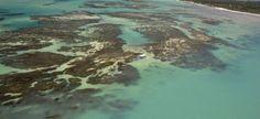 Pregopontocom Tudo: Pescadores e órgãos ambientais se unem contra extinção na Costa dos Corais...