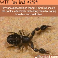 Pseudoscorpions effectively protecting Books - Awesome! ...Living IN Books, & eating BOOKLICE & DUSTMITES? - Eeeew! - WTF! Not so fun facts