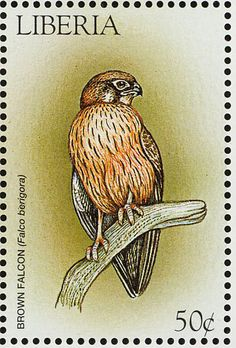 Brown Falcon stamps - mainly images - gallery format