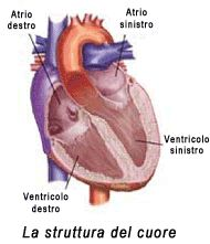 Il cuore