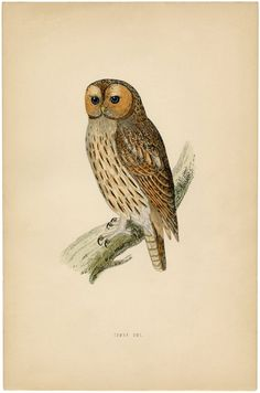 Vintage Printable Owl Images - The Graphics Fairy