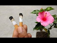 Easy and free natural pesticide for plants | Organic pesticide - YouTube