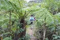 Lerderderg Heritage River Walk - Wombat State Forest - Victoria (Bare Bones Bushwalking) - The Bushwalking Blog State Forest, River Walk, Wombat, Bones, Eco Friendly, Travel Destinations, Walking, Victoria, Australia