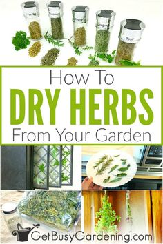 There are many uses for dried herbs. You can make tea, use them for cooking, or fill your kitchen spice jars. It's easy to dry fresh herbs, and doesnt take much time. You can dry any herbs you have in the garden, like mint, sage, parsley, rosemary, basil, dill, and oregano, to name a few. Learn how to dry herbs using six DIY methods including in the oven, microwave, dehydrator, hanging bundles, using paper bags, an air-drying rack, and more! Plus get storage tips. #herbgardening #gardening