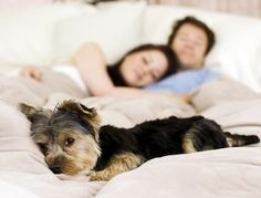 Sleeping with your pet may be risky - Many people love to snooze and snuggle with their cats or dogs at night, but parasites such as tapeworms, ringworm and hookworm, as well as diseases borne by fleas and ticks, can all be transmitted from pets to people. The popular notion that dogs and cats are actually cleaner than humans is a myth. The CDC says that 75 percent of all emerging infectious diseases affecting humans originate with animals, and sleeping with a pet may increase that risk.