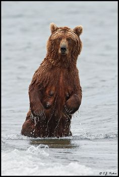 Mama Brown Bear