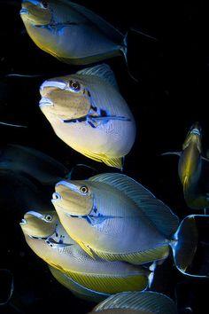 Coloridos peces