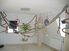 If you love birds and have the spare room or aviary, this is a great way to safely enrich habitats of larger bird species Parrot Perch, Parrot Cages, Bird Perch, Diy Bird Cage, Diy Bird Toys, Bird Stand, African Grey Parrot, Bird Aviary, Animal Room