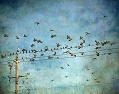 photograph of birds flying around power line - Tricia McKellar