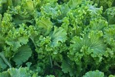 """These """"greens"""" (actually a cruciferous veggie) are a top source of vitamin K. For a tasty pesto, cho... - Visuals Unlimited, Inc./Inga Spence + Getty"""