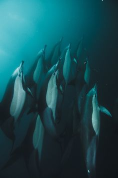 The Blue Rush by Alexander Safanov, Port St. Johns, South Africa