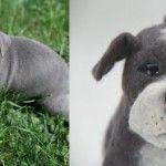 Custom Stuffed Animal: Your Dog