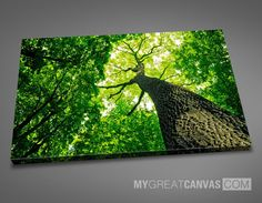 LARGE ART CANVAS - Spring Green Tree Art Canvas Print | Single Panel Tree Wall Art Canvas Print Stretched on Deep 3cm Frame | Ready to Hang