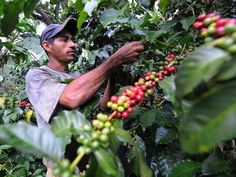 Image result for simple homes of coffee field workers in central america