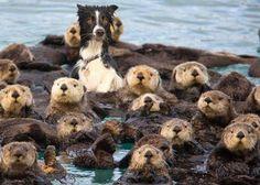 Funny Otter Dog   Funny Joke Pictures