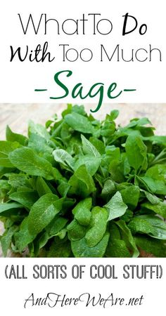 What To Do With Sage  And Here We Are... Different ways to preserve and use sage, more than just cooking!