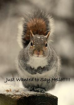 What a cute greeting card for any nature lover! A squirrel in nature during wintertime!