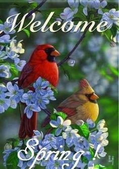 Carson Apple Blossom Cardinals Welcome House Flag Red Bird Nest Craft, Bird Feeder Craft, Red Bird Tattoos, Tattoo Bird, Cardinal Tattoos, Beautiful Birds, Animals Beautiful, Cardinal Pictures, Decoupage