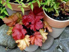 Ezeket a növényeket ültesd az egynyáriak helyére   Balkonada Plants, Gardening, Lawn And Garden, Plant, Planets, Horticulture