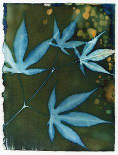 Blue Autumn Leaves #cyanotype #natureprint #leafdecor #natureprint #botanicalwallart Sun Prints, E Flowers, Alternative Photography, Artist Journal, Painting Collage, Book Making, Botanical Prints, Art World, Autumn Leaves