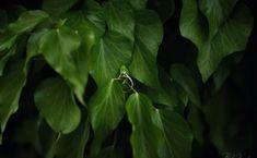 WIOSENNA SESJA NARZECZEŃSKA – KRAKÓW - Białe Kadry Plant Leaves, Plants, Fotografia, Plant, Planets