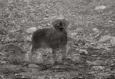 Strange and Weird Stories - Haunted by a Ghost Dog Ghost Pictures, Creepy Pictures, Ghost Pics, Aliens, Ghost Sightings, Ghost Hauntings, Ghost Type, Ghost Dog, Paranormal Photos