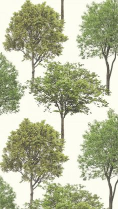 I LOVE WALLPAPER Woodland Trees Wallpaper Natural Green, Cream (FD40665). For similar designs visit ilovewallpaper.co.uk #ilovewallpaper #Tree #Wallpaper #InteriorDesign Tree Wallpaper, Green Cream, Tree Designs, Designer Wallpaper, Pattern Wallpaper, Woodland, Past, Trees, Popular