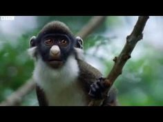 .Funny Talking Animals - Walk On The Wild Side [BBC-One] - Episode 4 Part 1 .