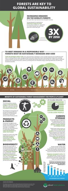 This pin illustrates how the demand for forests is increasing. It talks about the benefits and the need for forest sustainability.