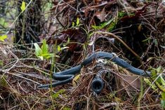 A southern black racer snake slithers across the rifle barrel held by junior Army National Guard sniper Pfc. William Snyder as he practices woodland stalking in a camouflaged ghillie suit at Eglin Air Force Base on April 2018 The Sniper, Sniper Rifles, Ghillie Suit, Sniper Camouflage, Military Camouflage, Military Special Forces, Military Life, Military News, Guns And Ammo