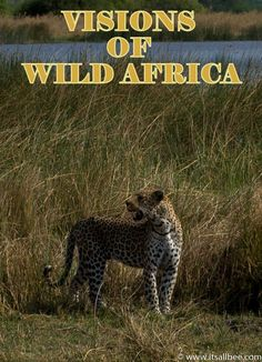 Visions of Wild Africa | Exploring Botswana's Okavanago Delta  Safari In Botswana's  Moremi National Park