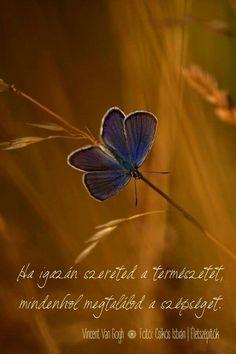 Ha igazán szereted... Life Quotes, Funny Quotes, Van Gogh, Messages, God, Happy, Nature, Vans, Scrapbook