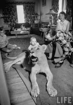 Blondie the Pet Lion, 1955  Via How to be a Retronaut