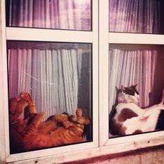 chillout cats window lissabon