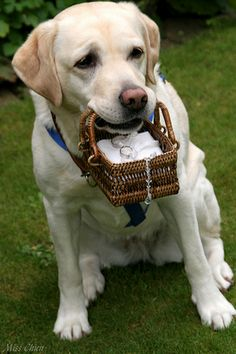 """What's cuter than a furry ring bearer? This is sure to get some """"aww's"""" at the ceremony! #dogsinweddings"""