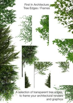 New Tree Texture Photoshop Architecture Ideas Architecture Graphics, Architecture Drawings, Landscape Architecture, Landscape Design, Chinese Architecture, Photoshop Rendering, Nature Sauvage, Tree Sketches, Landscape Drawings