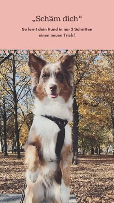 The Importance Of Using Dog Obedience Games In Dog Training – Dog Training Obedience School For Dogs, Dog Shots, Bearded Collie, Dog Games, Dog Barking, Dogs Of The World, Dog Behavior, Dog Grooming, Pets