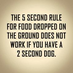 The 5 Second Rule for food dropped on the ground does not work if you have a 2 second dog. Lovers Quotes, Dog Quotes, Funny Quotes, Life Quotes, Animal Jokes, Funny Animals, Funny Dogs, Cute Dogs, Girl And Dog