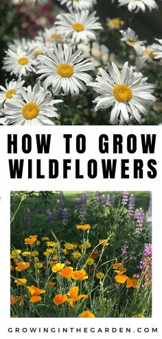 Learn how to grow wildflowers in your backyard garden. Take a look at these simple gardening tips if you are a beginner gardener or have been gardening for years. Wildflowers are a great addition to any garden. Diy Gardening, Gardening For Beginners, Organic Gardening, Flower Gardening, Container Gardening, Beautiful Flowers Garden, Beautiful Gardens, Growing Flowers, Planting Flowers