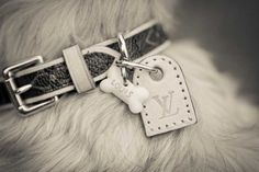 Image Detail for - Pet Photographer Cheshire: Luis Vuitton Dog Photograph Luxury Dog Collars, Designer Dog Collars, Pet Collars, Louis Vuitton Dog Collar, Led Dog Collar, Dog Supplies, Dog Leash, Dog Accessories, Dog Love