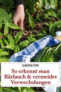 Bärlauch erkennen – so gelingt es den Unterschied zum Maiglöckchen oder der Herbstzeitlosen auszumachen. #bärlaucherkennen #wiesiehtbärlauchaus #gartenkunde #pflanzenwissen #garten-tipp #gartenwissen #pflanzen #naturgarten #servus #servusmagazin #servusinstadtundland Running Shoes, Confusion, Natural Garden, Tips, Runing Shoes