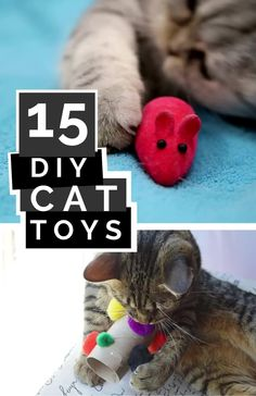 Treat your favorite feline to some new and creatively fun DIY cat toys that are sure to be a hit. Check out the homemade cat toy ideas in this list for inspiration and make one today! #cats #cat #DIYcattoys #cattoys #kitty Homemade Cat Toys, Diy Cat Toys, Fun Diy, Easy Diy, Pet Tips, Diy Stuffed Animals, Four Legged, Grandchildren, Creatures